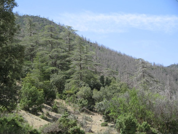 Préservation du patrimoine forestier: Treize projets pour Alger à l'horizon 2029