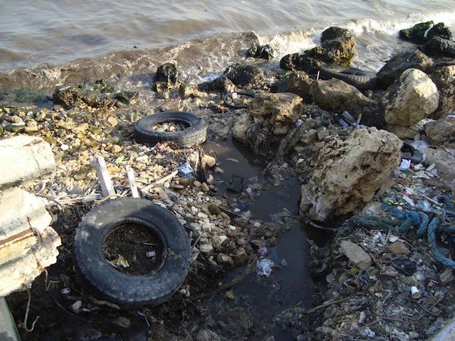 Algérie – 45 délits d'atteinte à l'environnement enregistrés à El Tarf en 2012